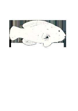 East West Market Logo